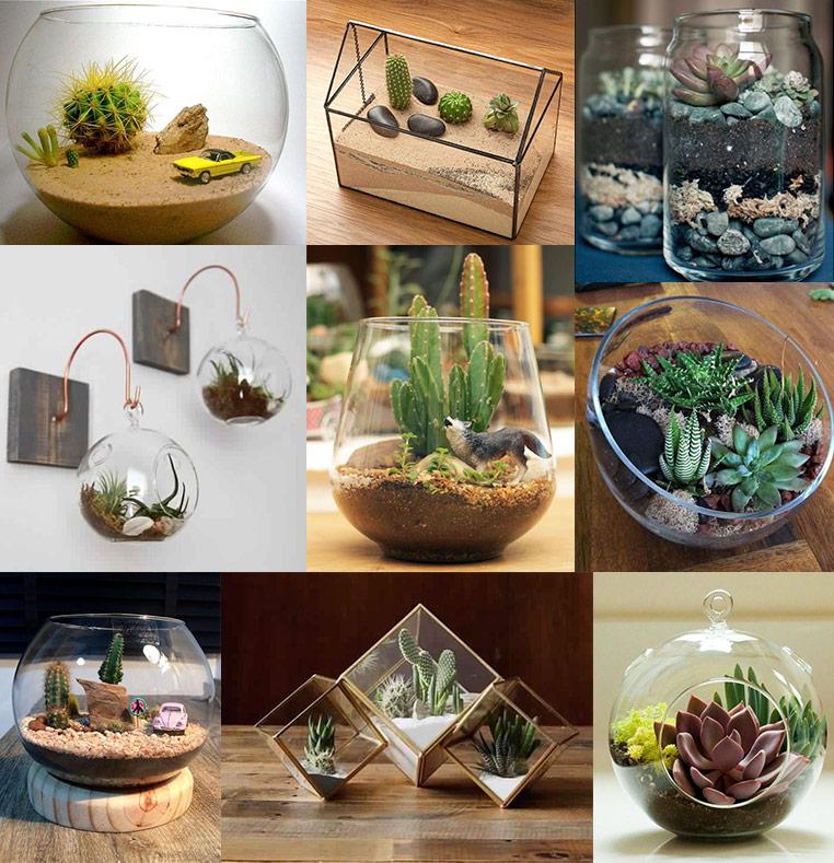 Ideas de terrario para cactus